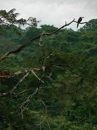 Toucans, parrots and macaws are just some of the birdlife visible in Peru's Manu National Park