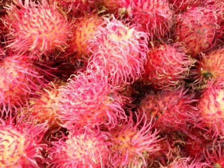 "Panama's rambutan, called ""Monom-Chino"""