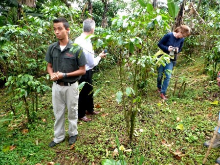 Organic shade-grown coffee farm at Finca Rosa Blanca, Costa Rica