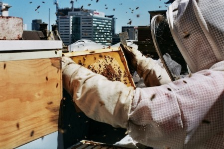 Guests eat the honey produce on the roof of Alto Hotel in Melbourne, Australia