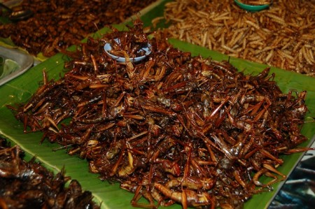 Fried insects at night market of Phuket, Thailand