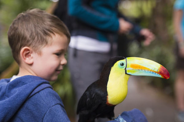 Ecotourism and family travel in Costa Rica: A child with a toucan at La Paz Waterfall Gardens in Costa Rica